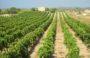 Calcolo IMU Terreni Agricoli